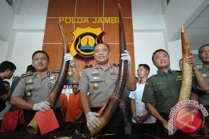 Polda Jambi tangkap tiga penjual gading gajah