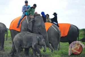 Ngabuburit unik di habitat gajah Bengkulu