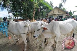 Empat warga Kupang tewas dibacok pencuri sapi