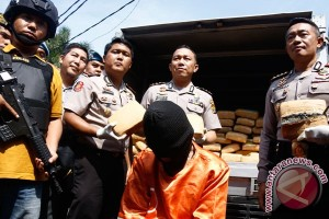 Tangkapan Ganja Di Lampung