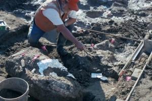 Temuan arkeologi di California dinilai bisa merevisi sejarah manusia