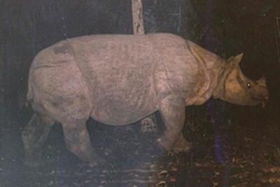 Indonesia on rhino emergency status