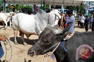 Pakar: potensi ekonomi kotoran sapi triliunan rupiah pertahun