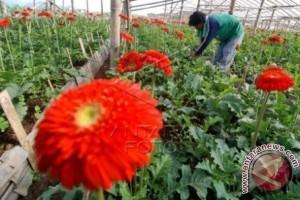 Bisnis bunga potong Sukabumi melonjak drastis