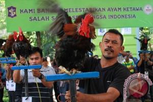 Kontes ayam ketawa di Palembang