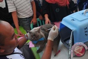 49 warga terkena gigitan hewan penular rabies