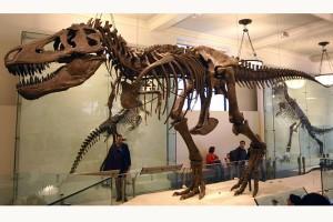 T. Rex tidak berbulu menurut studi baru