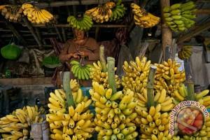 Mahasiswa UB ciptakan plastik berbahan kulit pisang