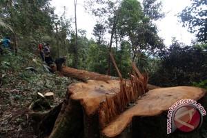 Ilegal Logging TN Gunung Leuser