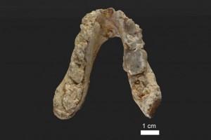Fosil di Yunani pertanyakan asal manusia dari Afrika
