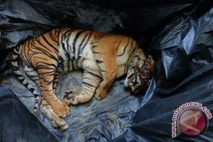 Pembunuhan Harimau Sumatera