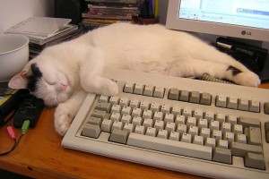 Agar karyawan tak stres, perusahaan Jepang andalkan kucing kantor