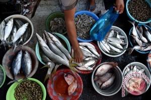 Nelayan tidak melaut sebabkan harga tongkol tinggi
