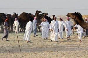 Ribuan unta yang terjebak dalam perseteruan Qatar kembali ke pemiliknya