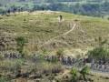Sejumlah pebalap melintasi bukit pada Etape 4 Balap Sepeda Tour de Flores (TDF) 2017 di Mbay, NTT, Senin (17/7/2017). Etape 4 balap sepeda TDF 2017 diikuti 67 pebalap dengan menempuh rute Mbay-Borong yang jaraknya 170,9 Km. (ANTARA /Nyoman Budhiana)