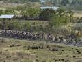 Sejumlah pebalap melintasi bukit pada Etape 4 Balap Sepeda Tour de Flores (TDF) 2017 di Mbay, NTT, Senin (17/7/2017). Etape 4 balap sepeda TDF 2017 diikuti 67 pebalap dengan menempuh rute Mbay-Borong yang jaraknya 170,9 Km. (ANTARA/Nyoman Budhiana)