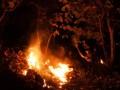 Kebakaran Hutan Jati