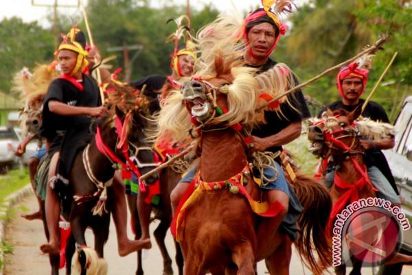Gemuruh kuda Sandelwood di Pulau Sumba
