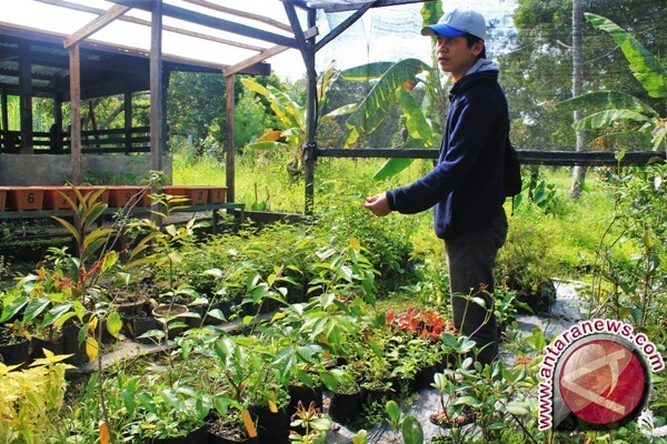 Climate in Jayawijaya suitable for sakura cultivation