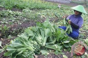 Indonesia desak WTO sepakati perlindungan petani kecil