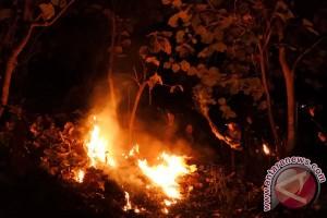 Bojonegoro waspadai ancaman kebakaran hutan