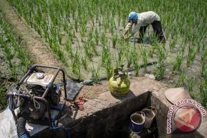 Irigasi jebol, puluhan hektare sawah Bengkulu terancam kekeringan
