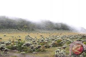 Penjara lima tahun bagi pemetik bunga edelweis