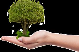 Jawa Tengah ingin mentradisikan kegiatan tanam pohon