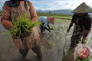 LIPI: mayoritas petani masih andalkan kredit nonbank