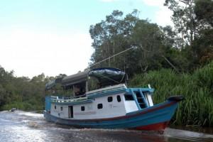 Misteri Sungai Sekonyer di Tanjung Puting