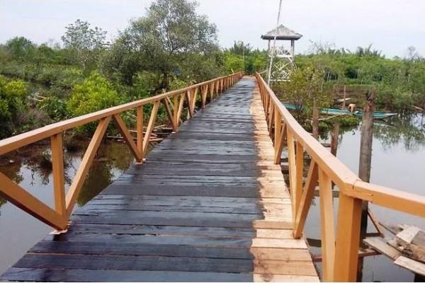 UI kembangkan wisata mangrove di Nusakambangan