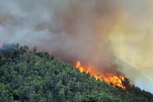 Seorang tewas dalam kebakaran hutan di Aljazair Utara