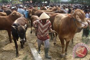 Yogyakarta terapkan wajib surat keterangan kesehatan hewan kurban