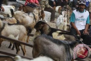 Pemkot Bandung larang berjualan hewan di trotoar