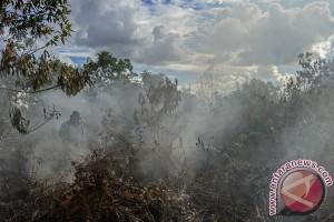 Kalbar akan restorasi 119.000 hektare lahan gambut