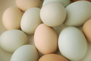Telur terkontaminasi juga masuk ke Luksemburg