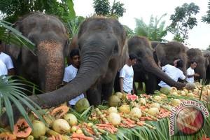 Perayaan Hari Gajah Sedunia
