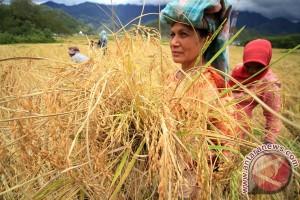 Komoditas pertanian pengaruhi pertumbuhan ekonomi Aceh