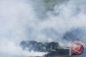 BPBD: dua hektare hutan Gunung Cikurai terbakar