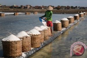 Musim hujan harga garam petani Probolinggo naik
