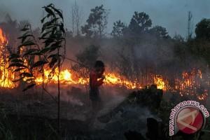 Hutan Pegunungan Rahtawu Kudus terbakar