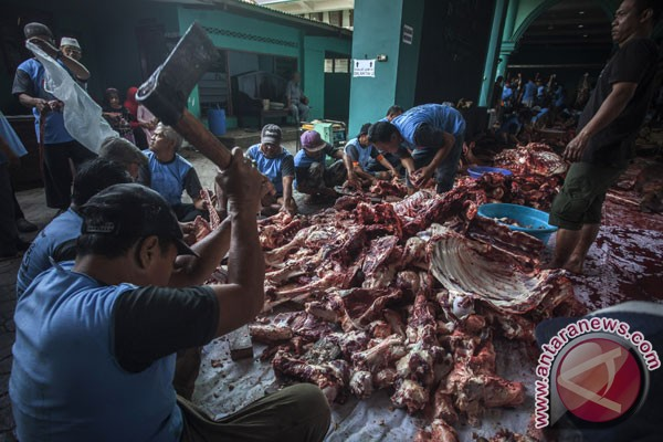 36 hewan kurban Gunung Kidul terinfeksi cacing