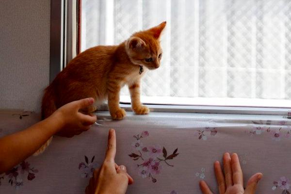 Kucing dibiarkan berkeliaran di gerbong kereta Jepang