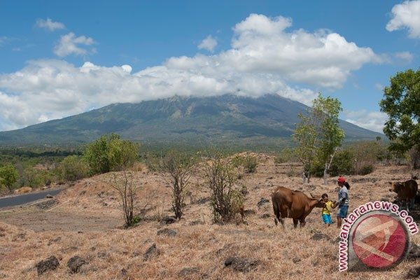 Kementan siapkan kandang penampungan ternak terdampak erupsi