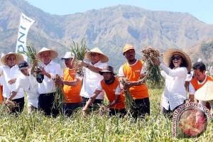 BNI salurkan KUR ke petani bawang di Sembalun