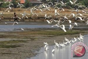 Lebih dari 120 burung mati di tambang pasir minyak Kanada