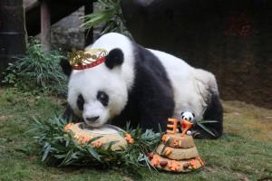 Garuda Indonesia istimewakan dua ekor panda