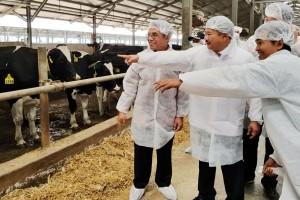 Kemitraan industri olahan susu pacu suplai bahan baku