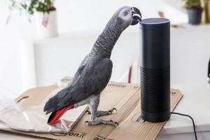 Burung beo di London berbelanja online dengan tiru suara pemilik