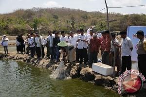 Petambak Lombok berpenghasilan Rp20 juta per bulan